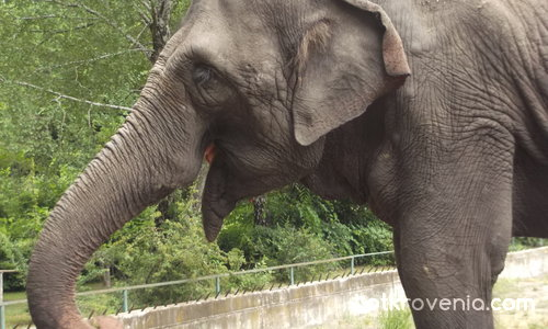 Усмивката на слона