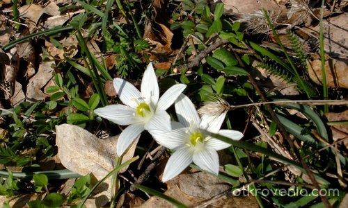 Предчувствие за пролет