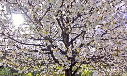 Един пролетен ден