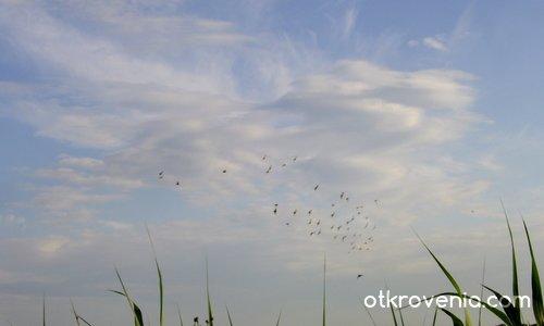Облачният пеликан и птиците