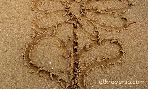 Цвете на пясъка