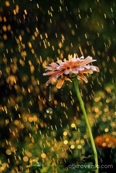Златен дъжд
