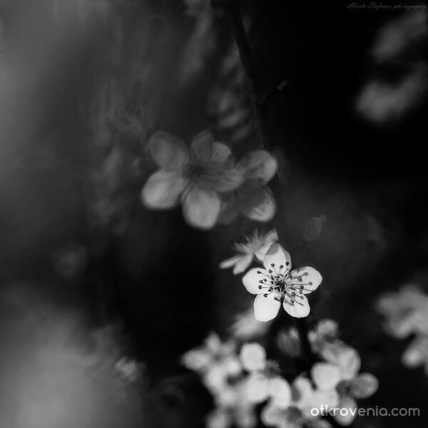 Пролетта ноктюрно