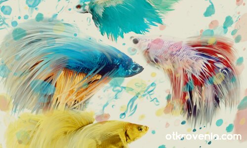 Бойни рибки