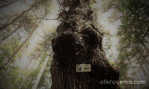 Пазителят на гората