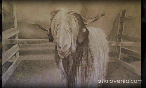 Асоциация за автохтонни породи кози в България