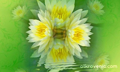 Зелено-Жълта Феерия