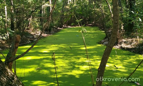 Магично зелено