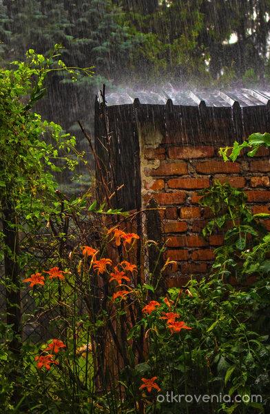 Под дъжда