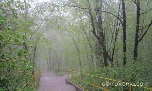 Път през гората