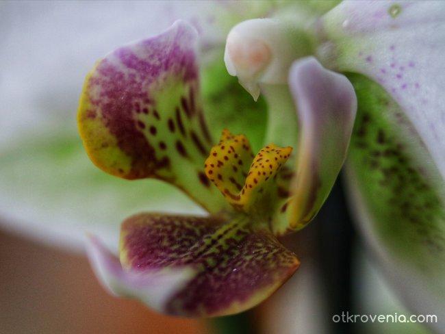 Орхидея - един различен поглед