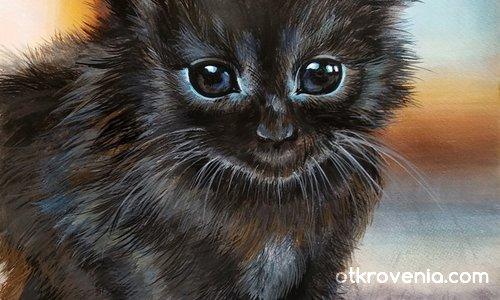 Черно котенце