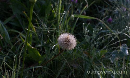 Сутрин в росните треви - без ретуш