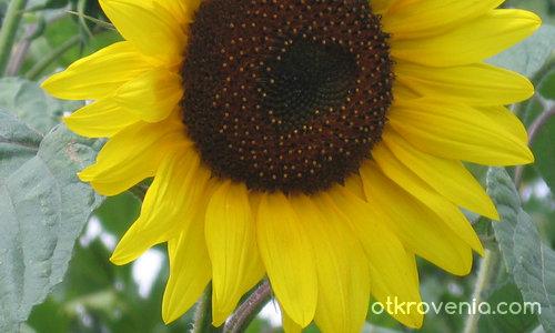 Портрет на един лъч от слънчеви надежди