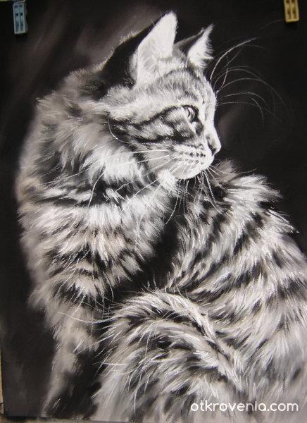Котка