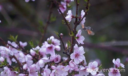 """Пролетни аромати"""
