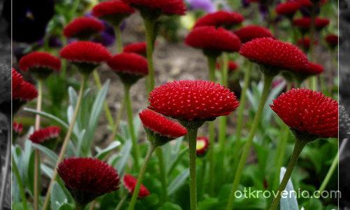 Червени шапчици ;)