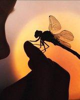 Odonata (Мериан Д)