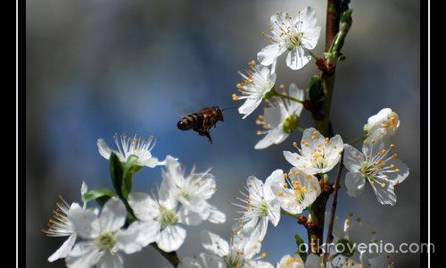 Пролет е...