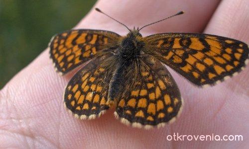 Пеперудка 2