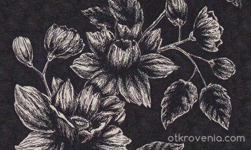 Черен цвят