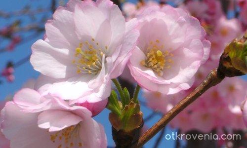 Розова серия 2