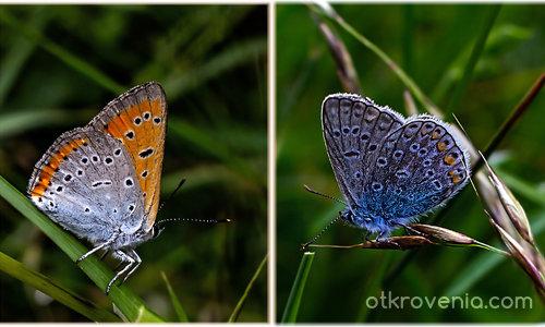 Пеперуден диптих