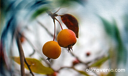 Код оранжево - 4