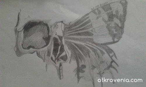 Черепа с пеперуденото крило