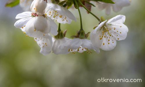 Пролетна премяна