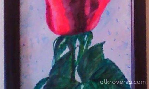 Моята шантава роза!