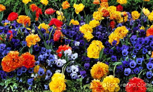 Пролетна леха