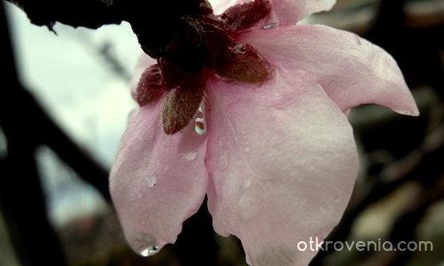 Окъпана пролет