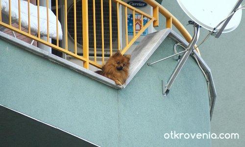 Клюкарката от шестия етаж!