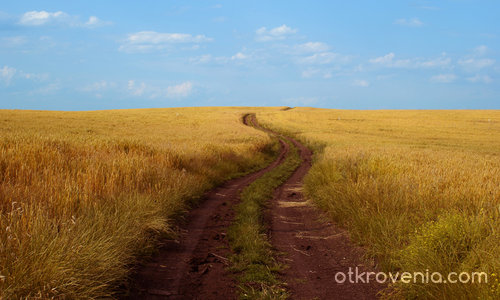 Път сред  житата