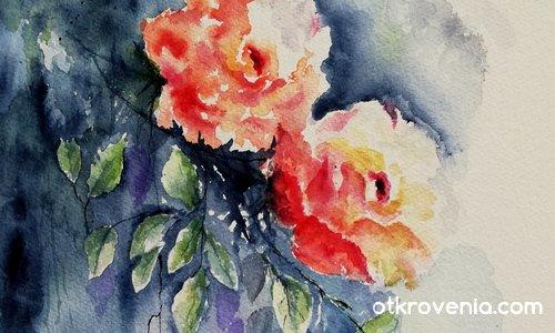 Моите рози