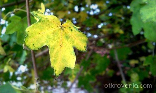 Символът на есента