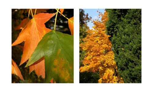 Есенни контрасти