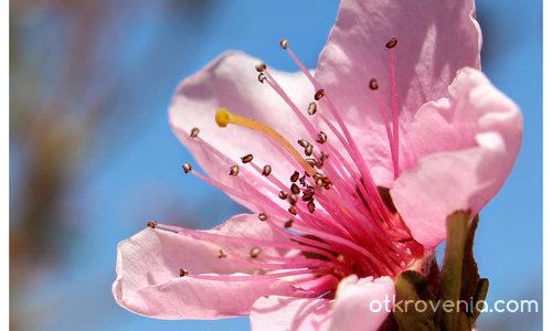 С аромат на пролет ІІ