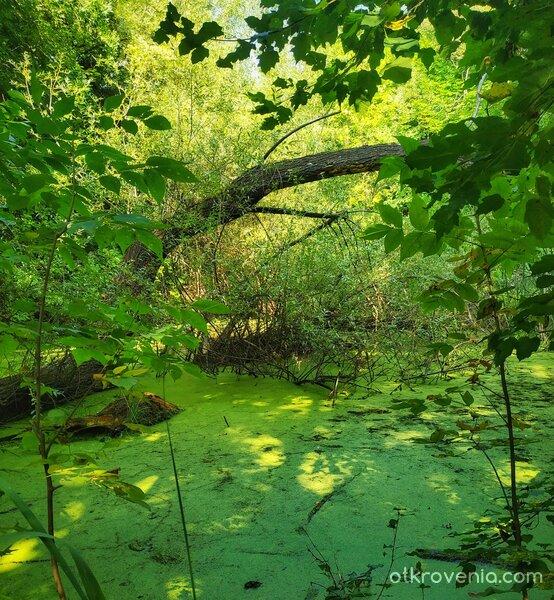 Домът на зелените феи