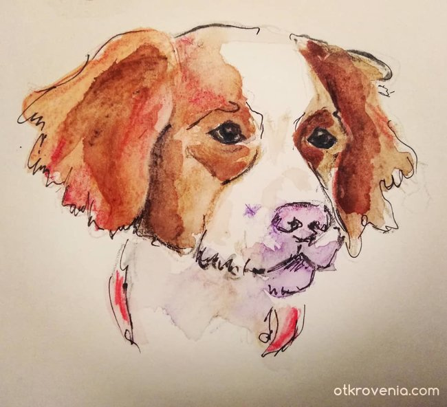 Скица - портрет на куче