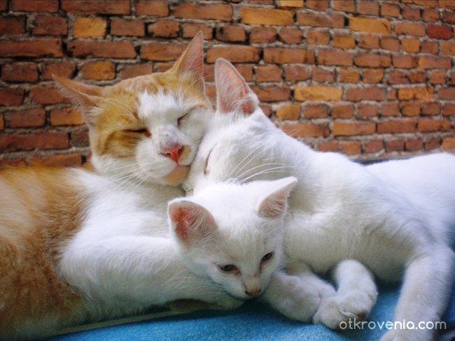 Мама, татко и аз...