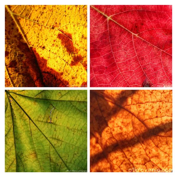 Есенни етюди II