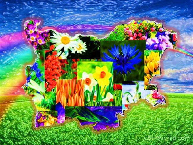 Сред дъга и цялата в цветя