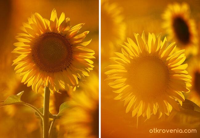 Слънчеви етюди
