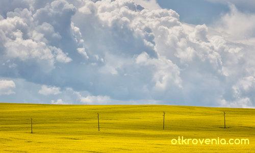 Пролетта се обажда