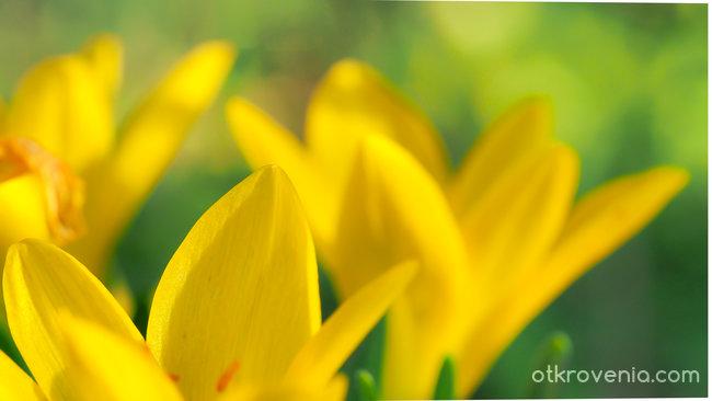 Есенно жълто