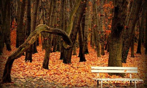 Есен в парка - 3