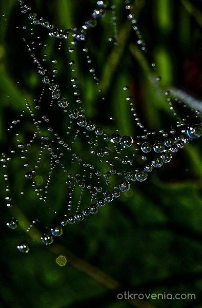 Сълзите на паяка