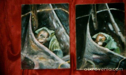 Две маймуни
